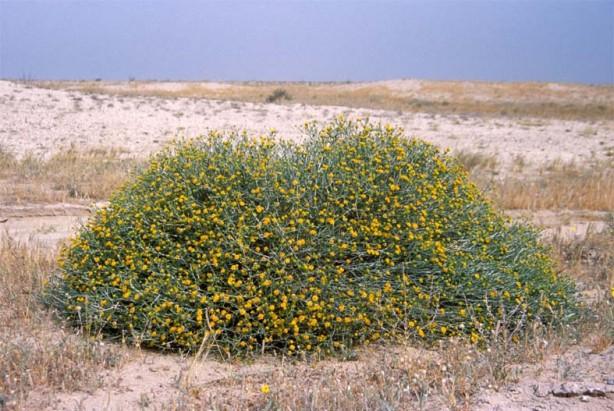 أهمية وفوائد الغطاء النباتي الطبيعي للإنسان والبيئة وأساليب تنميته و حفظه دراسات خضراء