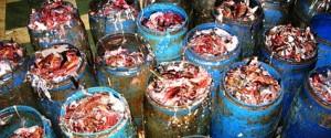 إنتاج الأسمدة العضوية من مخلفات الأسماك
