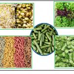 تصنيع الأعلاف المضغوطة من البذور المستنبته