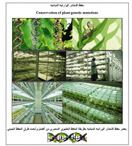 حفظ الذخائر الوراثيه النباتيه - دراسات خضراء