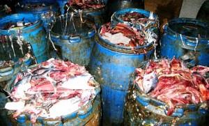 مخلفات الأسماك تعتبر من المواد الأولية الممتازة في صناعة الأسمدة العضوية