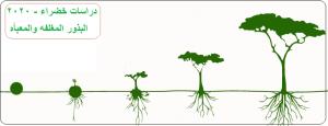 مشاريع إنتاج البذور المغلفه والمعبأه