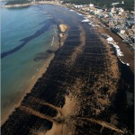 Oil pollution (5)