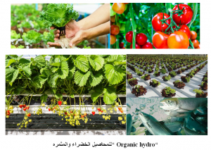 Organic hydroponics agriculture