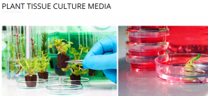 PLANT TISSUE CULTURE MEDIA - دراسة وتنفيذ البيئات الخاصه بكل نبات مطلوب إكثاره نسيجيا