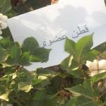 cotton-syria -2