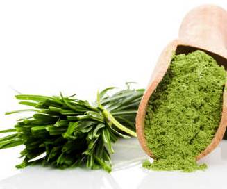 """منتجات عديدة  """" بودرات وعصائر """" صحية وطبيعية تصنع من البذور المستنبته"""