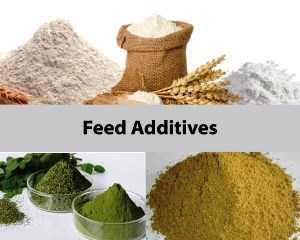 الإضافات العلفية -  feed additives