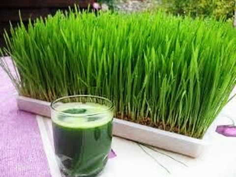 عصائر طبيعية و مفيدة لصحة الإنسان مستخرجة من البذور المستنبته