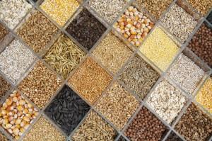 يمكن معالجة وتعقيم وتغليف كافة البذور بهدف الحمايه وزيادة الإنبات