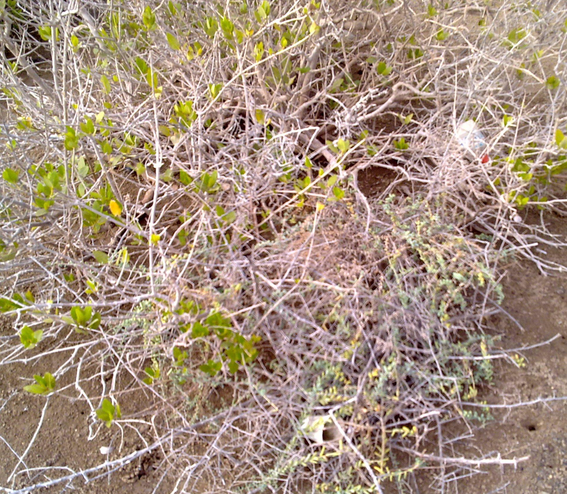 """خسارة المانجروف """" mangrove """" بين التغيرات"""