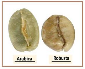 أشهر أصناف القهوة إنتشارا في العالم