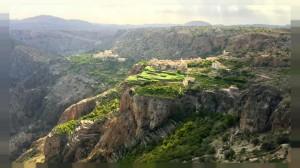 زراعة البن في جبال ظفار