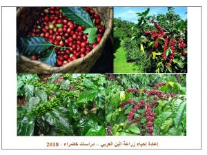 إعادة الدور الحيوي والإقتصادي لزراعة البن العربي