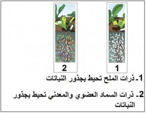 مخطط يظهر إحاطة الأسمدة المتخصصة بالأتربة المالحة بجذور النباتات