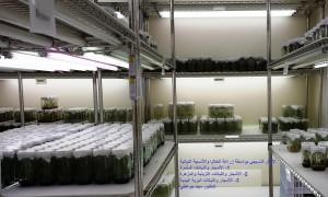 مختبر زراعة الخلايا والأنسجة النباتية