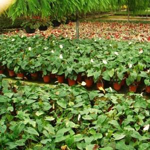 أشتال ونباتات نسيجية تم إنتاجها في أحد المختبرات التي تم تنفيذها من قبل دراسات خضراء