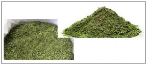 متممات علفية مصنعة من الأعشاب والطحالب البحرية