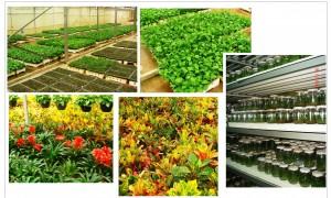 نباتات زينة داخلية نسيجية في أحد المشاتل الحديثة والتي نفذت من قبل دراسات خضراء