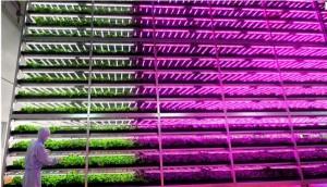 الإنتاج الهائل من النباتات في المختبرات وغرف النمو