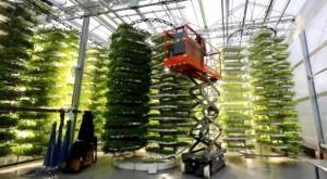 التقانات الحديثة في الإنتاج الزراعي