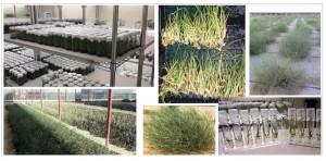 نباتات بيئية ومراعي نسيجية في أحد المشاتل التي نفذت من قبل دراسات خضراء