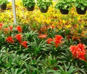 نباتات نسيجية في أحد المشاتل الحديثة التي نفذت من قبل دراسات خضراء