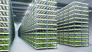 الزراعة الرأسية مستقبل الزراعة في الظروف البيئية والمناخية الصعبة