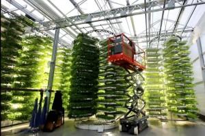 الزراعة المائية الرأسية