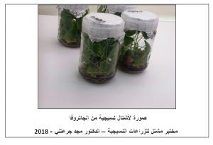 الزراعة النسيجية لأشجار الجاتروفا - دبي