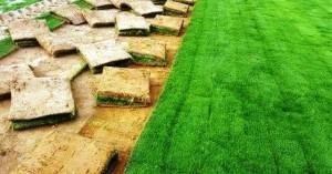 المسطحات الخضراء