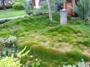 إستخدام المسطحات الخضراء بصوره مختلفه في عمليات تنسيق الحدائق