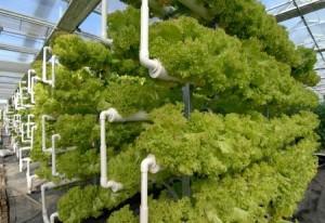 الزراعات المائيه - دراسات خضراء
