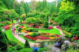 Design& landscape and implementation of all kinds of gardens